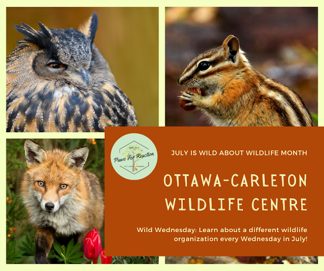 Wild Wednesday: Ottawa-Carleton Wildlife Centre is so much more than just a rehabilitation centre