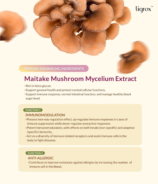 MAITAKE Mushroom Mycelium Extract  in Tigrox IMUGLO - Immunomodulation and improve resistance against allergies by increasing the number of immune cell in the blood