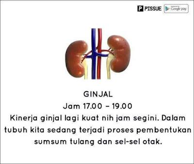 Jadwal Kerja dan Istirahat Organ Tubuh Manusia