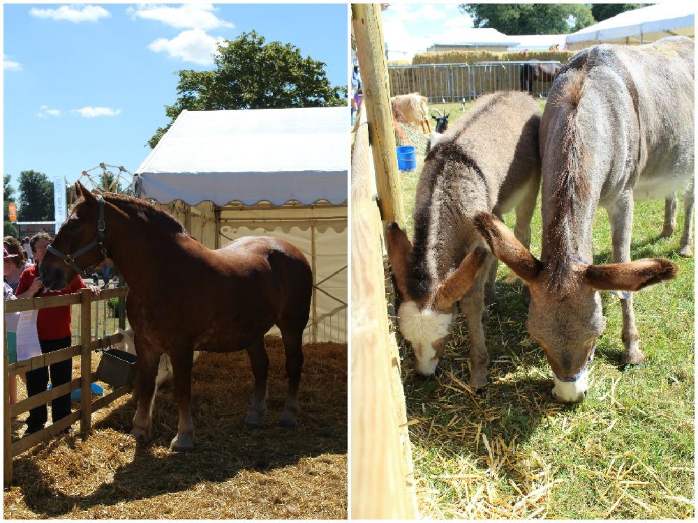 Adam's Farm Suffolk Punch and donkeys