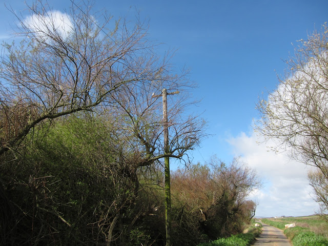 Narrow country road / mettled path with spring trees and telegraph pole.