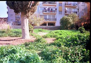 overgrown weeds in Cyprus garden