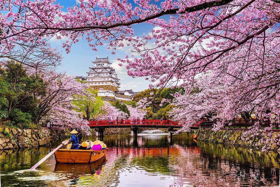 Manfaat Bunga Sakura untuk Wajah