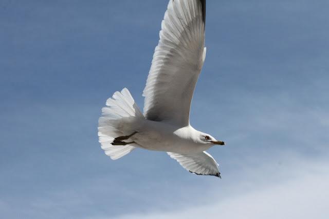 bird flying over my chicago