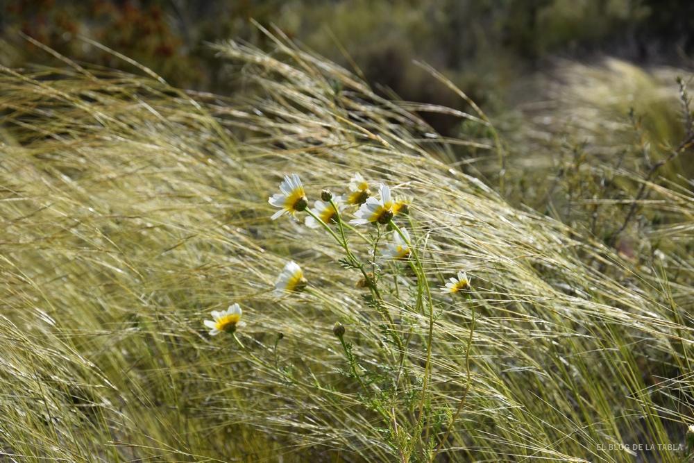 flores de margaritas silvestres y gramíneas