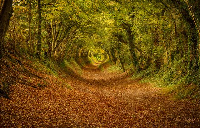 İngiltere Halnaker yakınlarındaki doğal tünel.