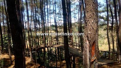 cari Wisata Hutan Pinus Haurgeulis Majalengka