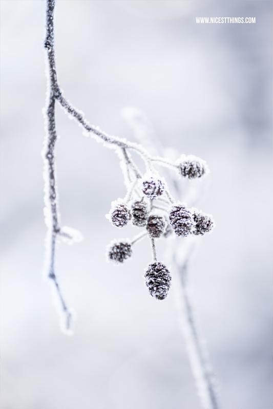 kleine Zapfen am Zweig im Schnee Makro