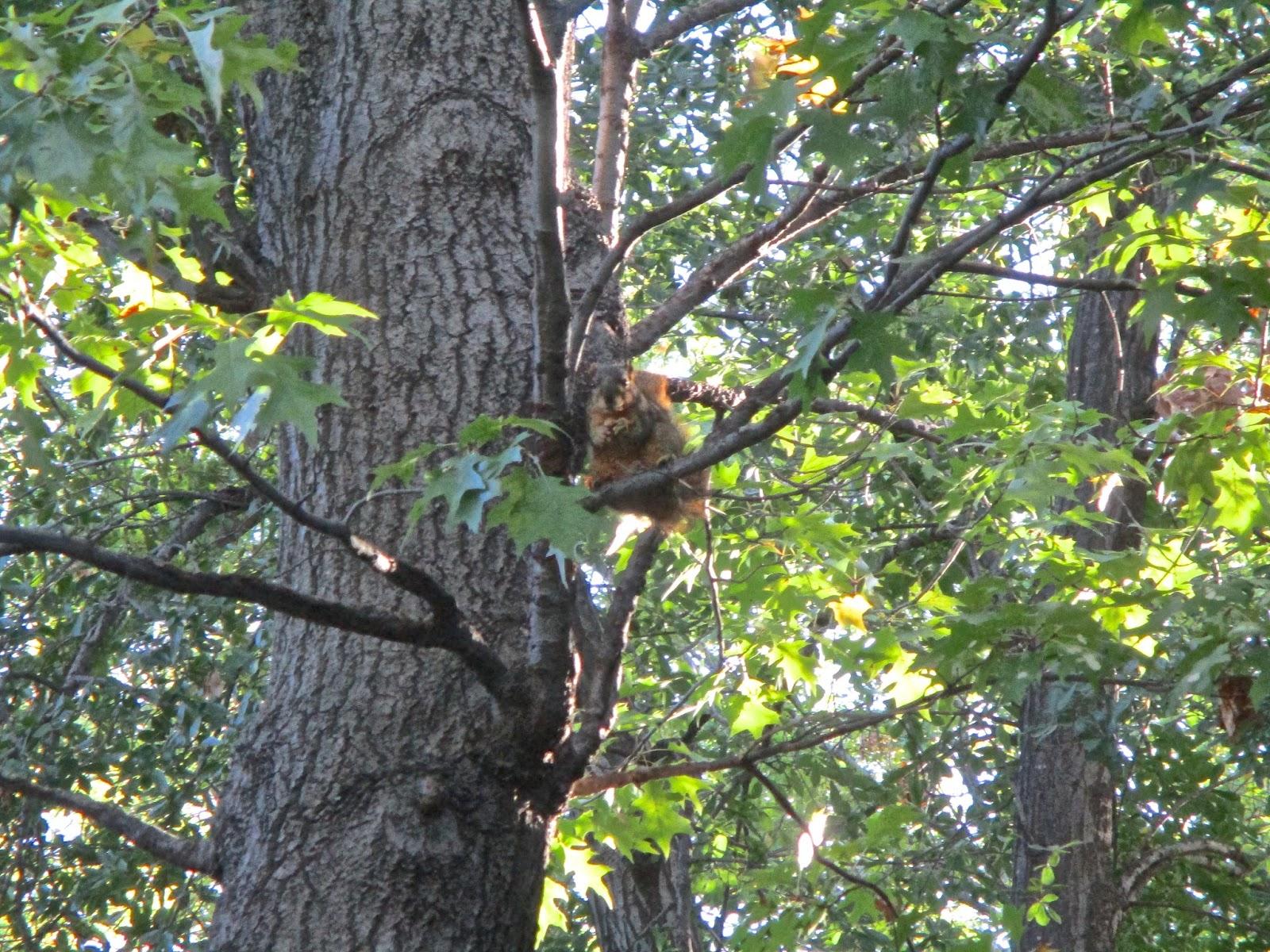 jkwgalleries: Squirrels, Birds, Fountain, Red Leaves ...