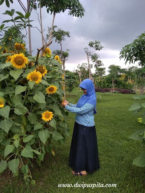 Keberagaman flora di indonesia