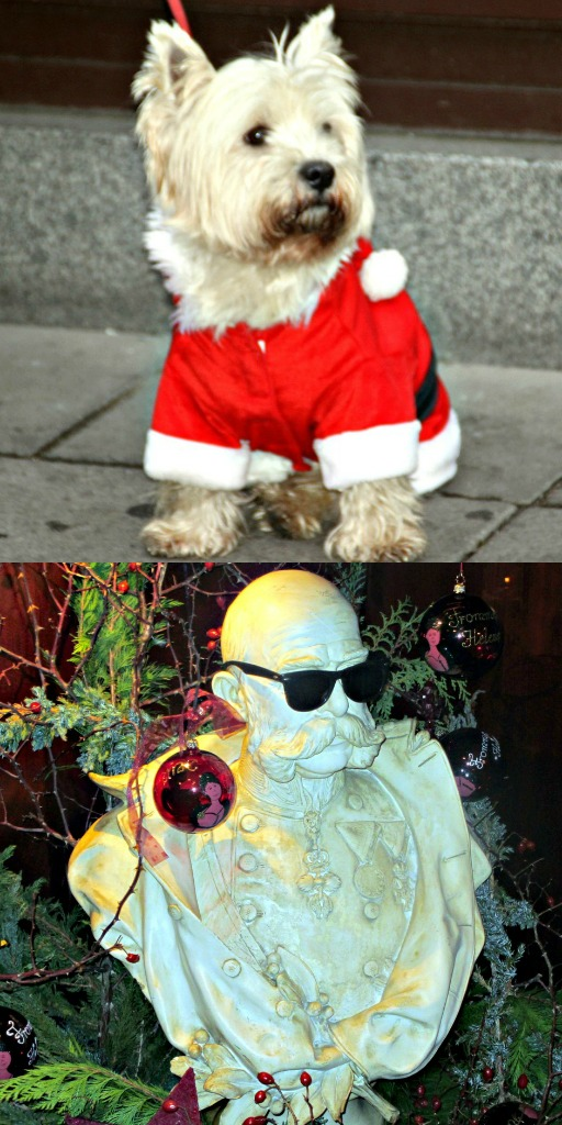Pas grand chose imperial vienna at christmas - Imperial westies ...