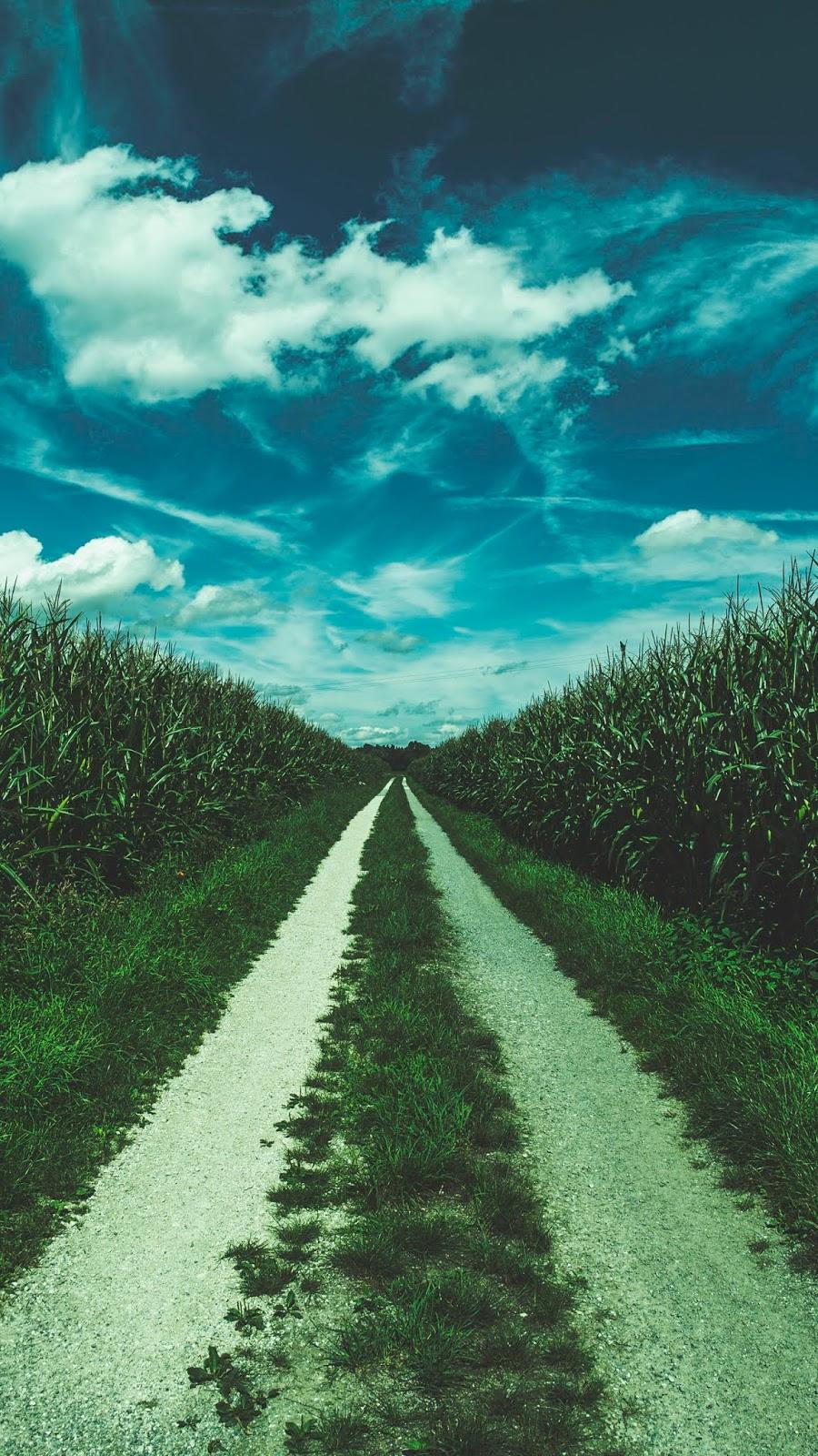 Con đường đi đến bầu trời