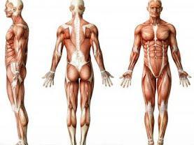 Anatomi Fascia Thoracolumbar Pada Tubuh Manusia