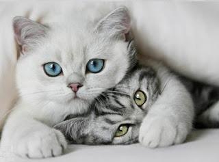 foto gatos abrazados