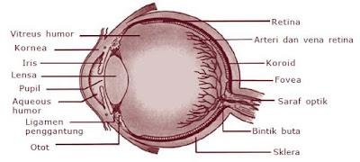 Struktur dan Bagian-bagian Mata beserta Fungsinya