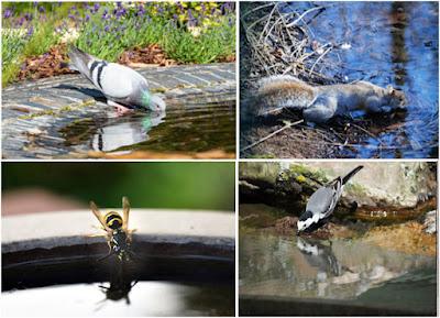 Neliosainen kollaasi, jossa kyyhkynen, orava, ampiainen ja västäräkki ovat juomassa, kukin omassa osiossaan.
