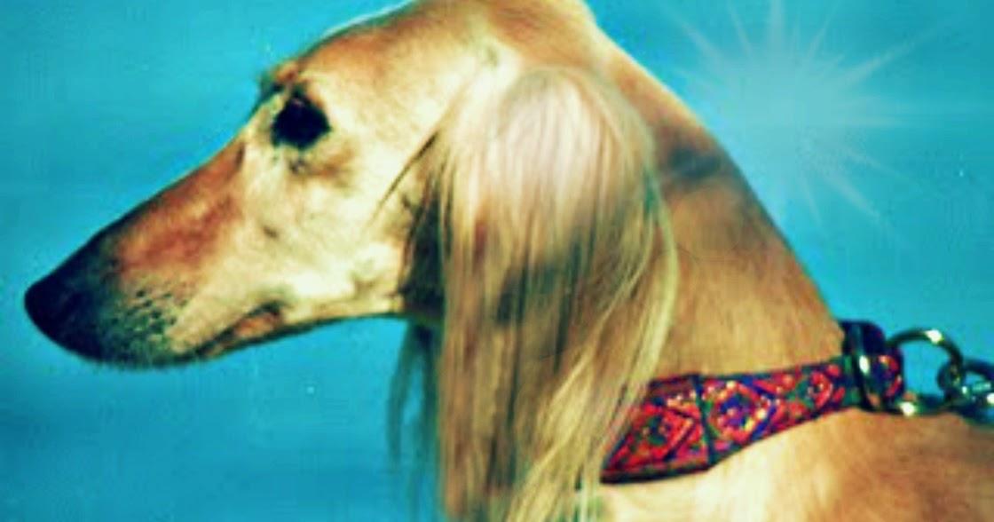 Natural Remedies Dog Bad Breath