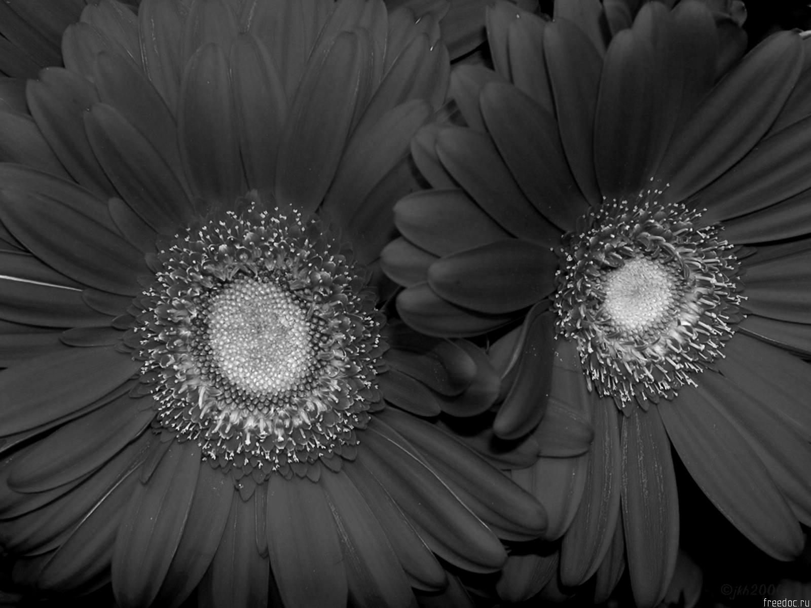 Pictures Of Flowers In Black And White