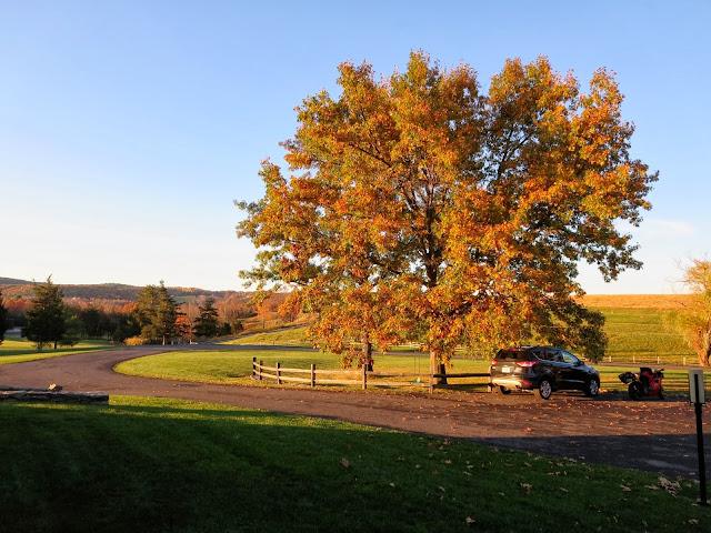 Autumn tree Upstate New York