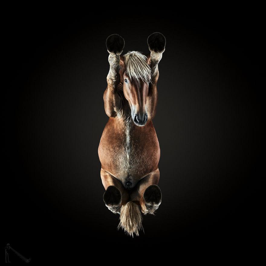 Mempotret Kuda Dari Bawah? Coba Lihat Karya Fotografi Satu ini bro