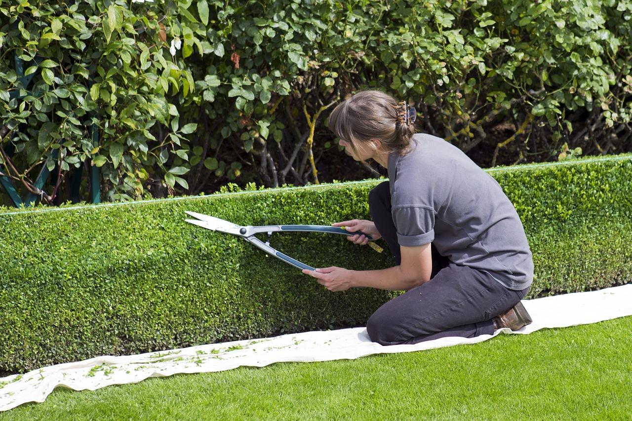 Comment entretenir convenablement vos espaces verts ?