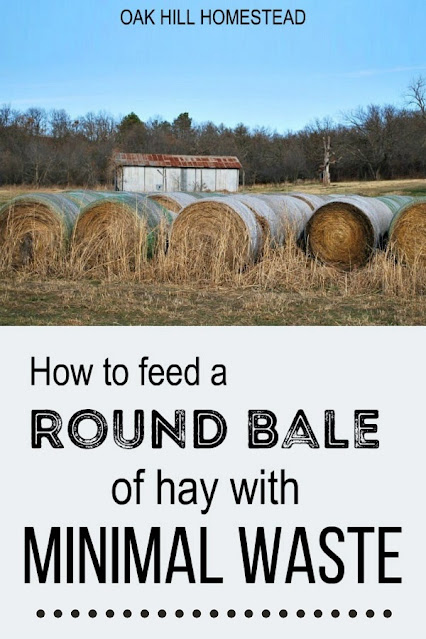 How to feed a round bale of hay