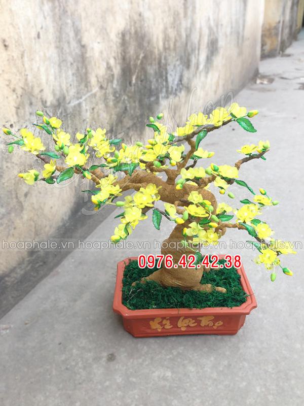 Goc bonsai cay hoa mai o Mai Dich