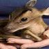 4η Οκτωβρίου: Παγκόσμια ημέρα των Ζώων - Φιλοζωική Αριδαίας «Ελπίδα»