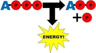 ATP Gerektiren Olaylar