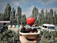 Westerway BIG Raspberry | Public Art Tasmania
