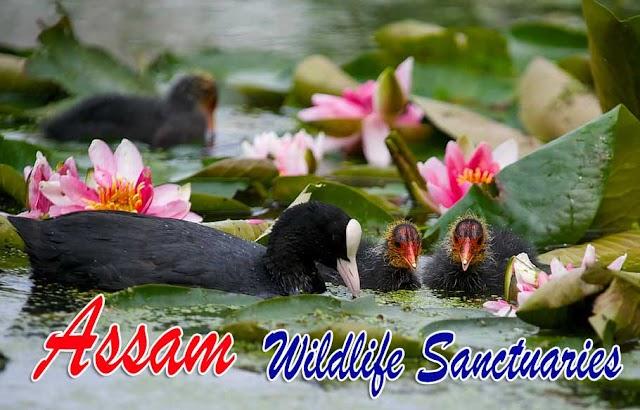 Assam National Parks and Wildlife Sanctuaries