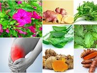 Membuat Ramuan Herbal untuk Mengobati Radang Sendi dari Prof. H.M. Hembing Wijayakusuma