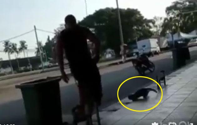 Netizen bengang lelaki ini sepak kucing sampai melambung