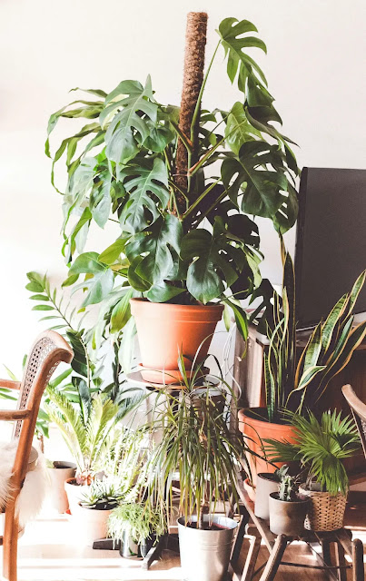 english ivy,english ivy care,how to grow english ivy,english ivy plant,english ivy plant care,english ivy indoor,english ivy indoors,growing english ivy,english ivy cuttings,variegated english ivy,english ivy propagation,english ivy uses,english ivy roots,english ivy removal,how to care english ivy,english ivy indoor care,english ivy houseplant,english ivy hanging plant,propagation of english ivy,english,how to care english ivy plant,how to propagate english ivy in soil,english ive