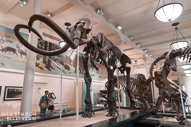 que hacer en Nueva York visitar museo