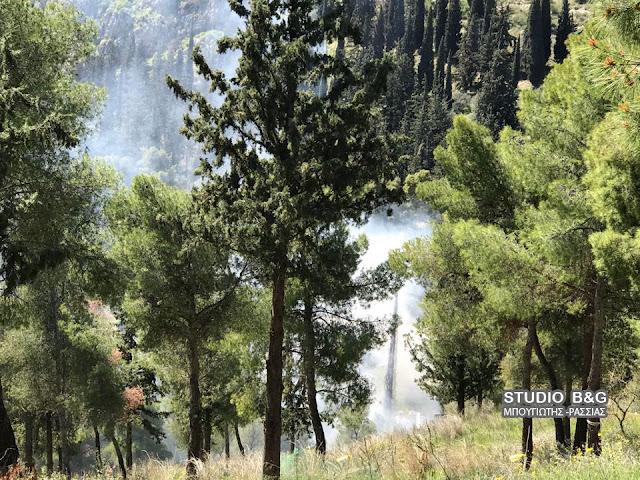 Πυρκαγιά στον Προφήτη Ηλία Άργους