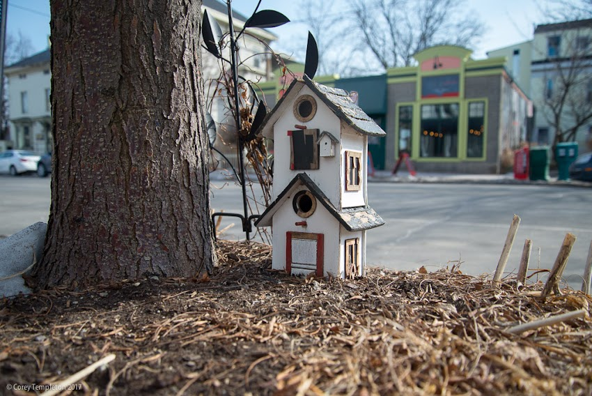 Portland, Maine USA February 2017 photo by Corey Templeton of birdhouse on Congress Street on Munjoy Hill.