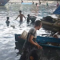 Jutaan Ekor Ikan Tembang Tiba-Tiba Muncul Di Sungai Bau-Bau