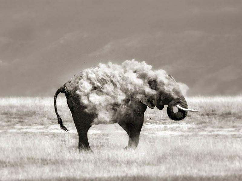 Смешные Фото Животных Снятых в Нужный Момент