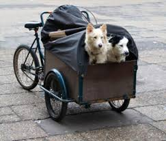 Pet Trailers: Bring Your Pet Wherever You Go