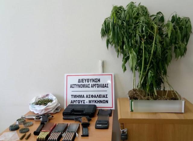 Σύλληψη 36χρονου στο Άργος με 18 δενδρύλια κάνναβης και όπλα