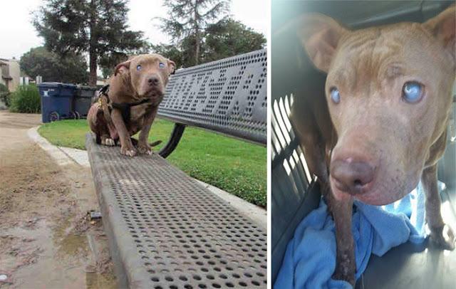 Слепую собаку бросили в парке на скамейке
