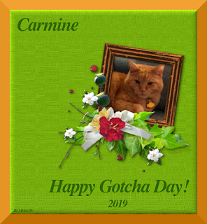 Carmine's Gotcha Day card.