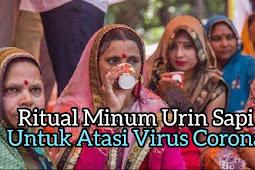 Ritual Minum Urin Sapi Untuk Atasi Corona