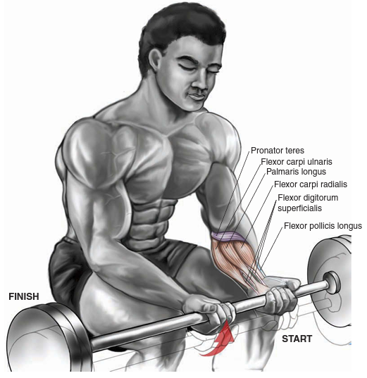 Exercise The Right Way & The Wrist Curl