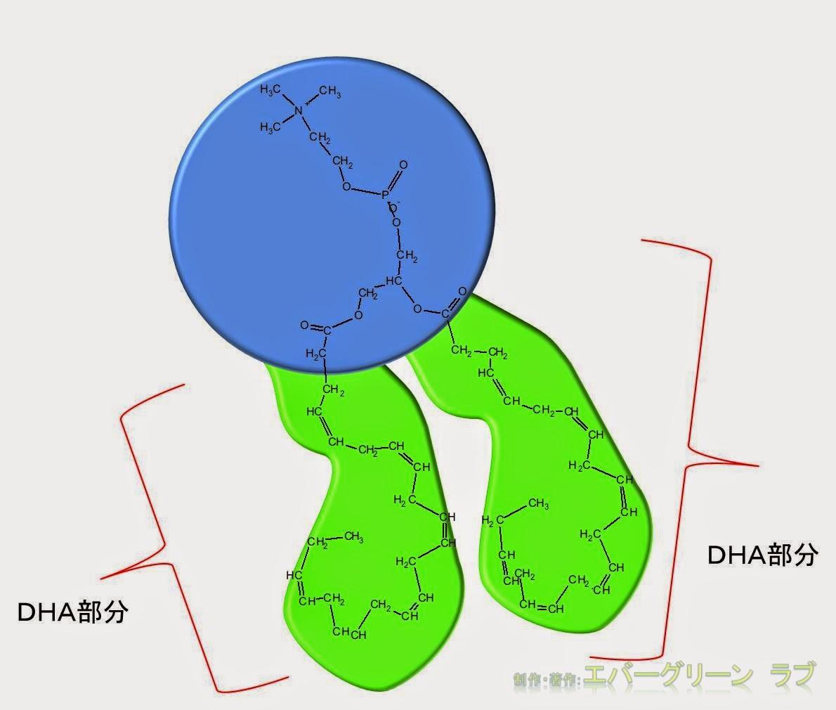 DHA, EPA, アラキドン酸, オメガ(ω)3, オメガ(ω)6, グリセロリン脂質, 動脈硬化, 脂肪, 脂質二重層,
