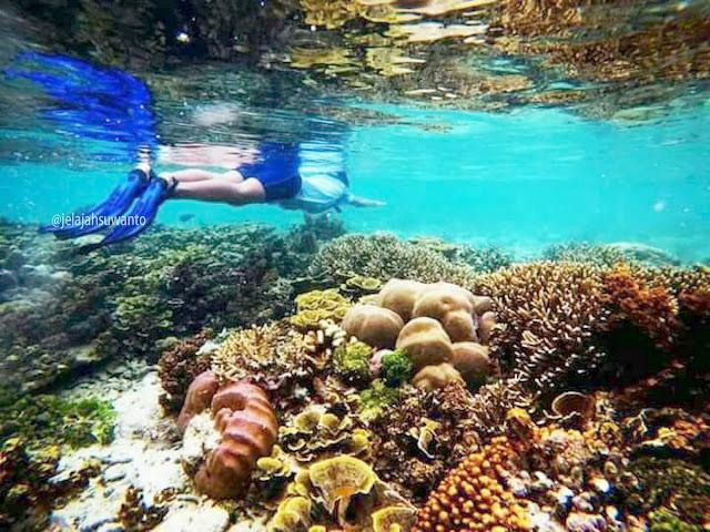 Terumbu karang tumbuh subur di perairan di depan Batu Lima Homestay Raja Ampat ⒸJelajahsuwanto