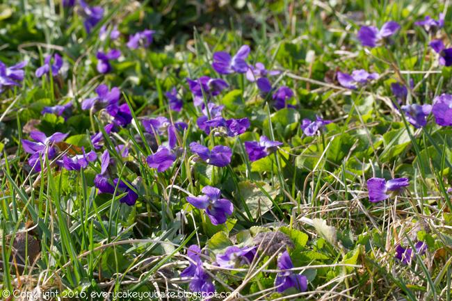 jak zbierać kwiaty fiołka