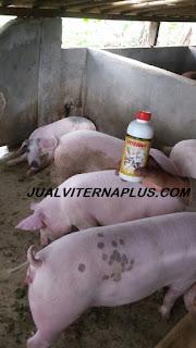 dosis penggunaan viterna untuk ternak babi,penggemukan babi