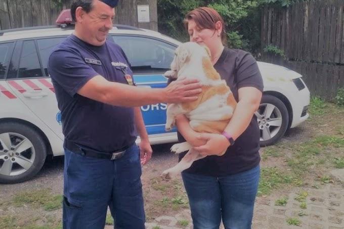 Kunhegyesről lopta el az angol bulldog fajtájú kutyát: egy napon belül megkerült